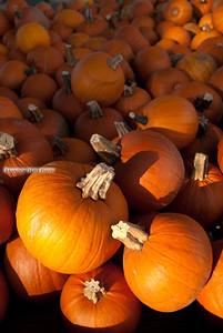 Pumpkins for Miles