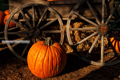 Pumpkin Wheel