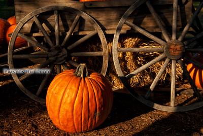 Pumpkin Wheel