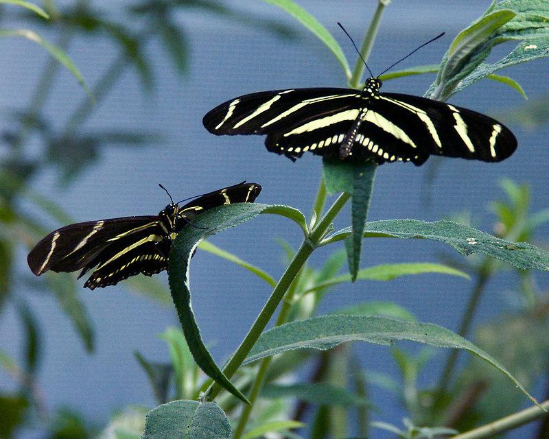 Sunning Butterflys