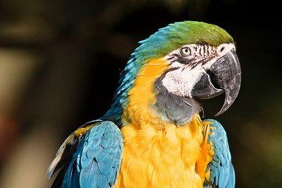 Macaws - Cougar Mountain Zoo