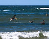 Pelicans at Canon Beach diving for food