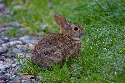 Rabbitts