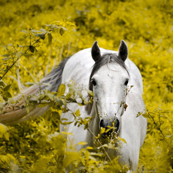 And Behold, A White Horse