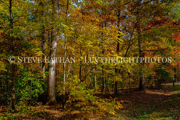 Kentucky Fall