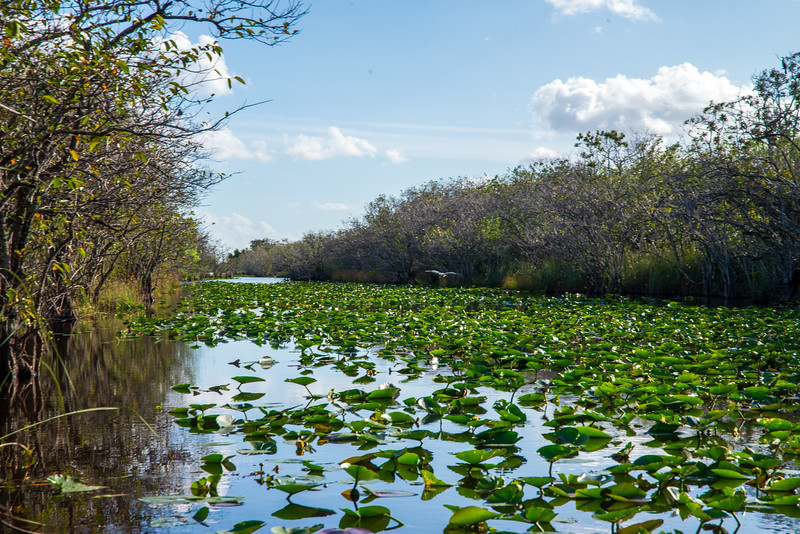 Everglades - Coopertown Airboat Rides