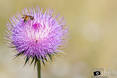Purple Bee Love