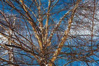 Sky Tree Limbs and Snow