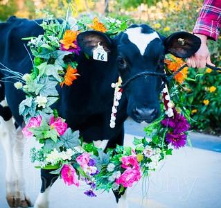 20180922 Rhinestone Cowboy celebrating the Equinox and Chicago's Farming-49