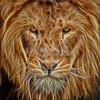 lion glow 1