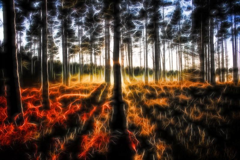 trees glow 2