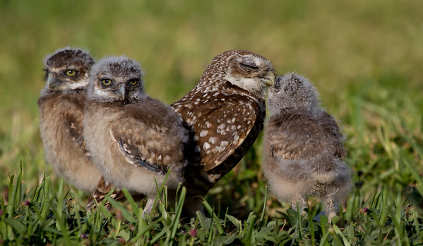 Mom Owl and Her Babies