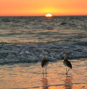 Timeout for Sunset