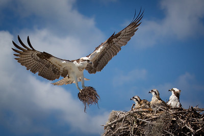 Osprey Homestead