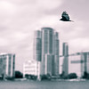 Bird Over Biscayne