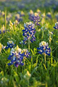 Bloomin' Blues