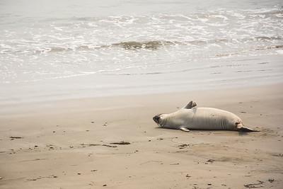 Beach Snooze