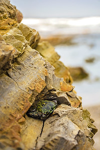 Crabby Camouflage