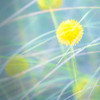 Grass and Yellow Flower Abstract