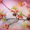 Almonds and Blossoms 2
