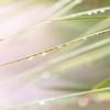 Wet Grass Abstract 3