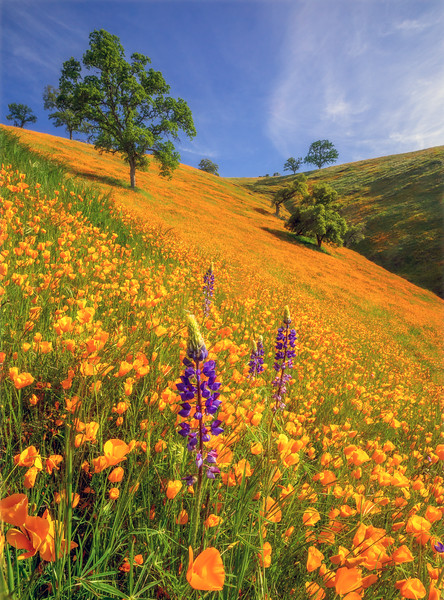 Amador County Spring