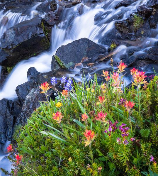 Wildflower Bouquet, Mine Creek