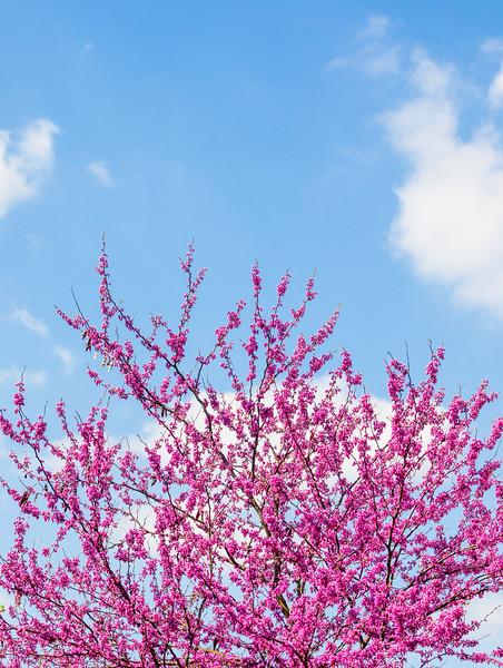 Pink Tree Minimal