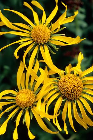 Spiral Wildflowers