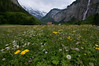 Fields of Lauterbrunnen