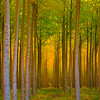 Forest of Color