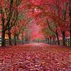 Red Road - Landscape Format