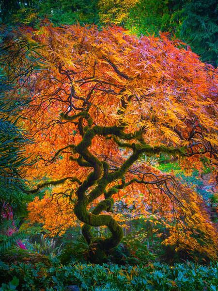 Tree of Orange