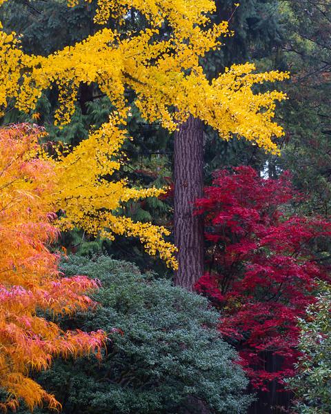 "Nature""s Palette"