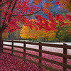 Autumn Glory