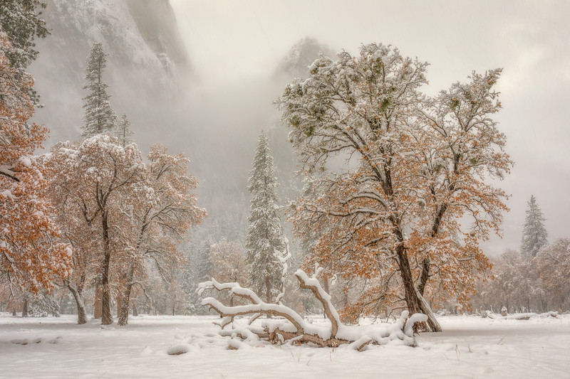 El Cap Meadow Transition of Seasons