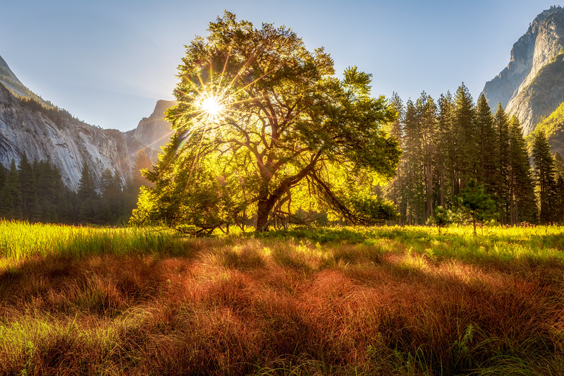 Cook's Meadow Summer Sunrise