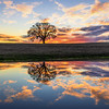 Lone Oak Tree Reflections