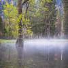 Seasonal Pond Morning Mist