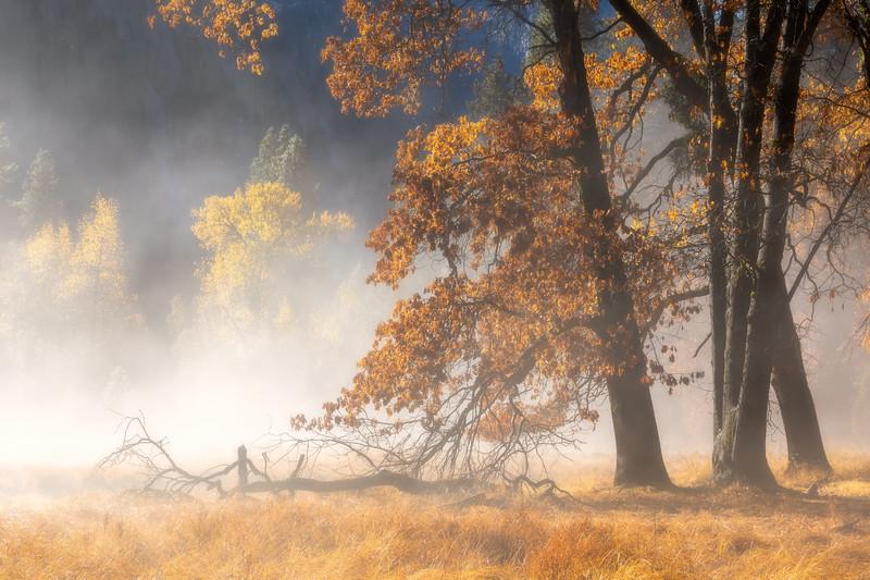 Black Oak Burning Mist 1