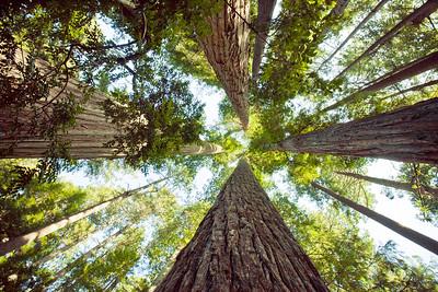Redwoods Park