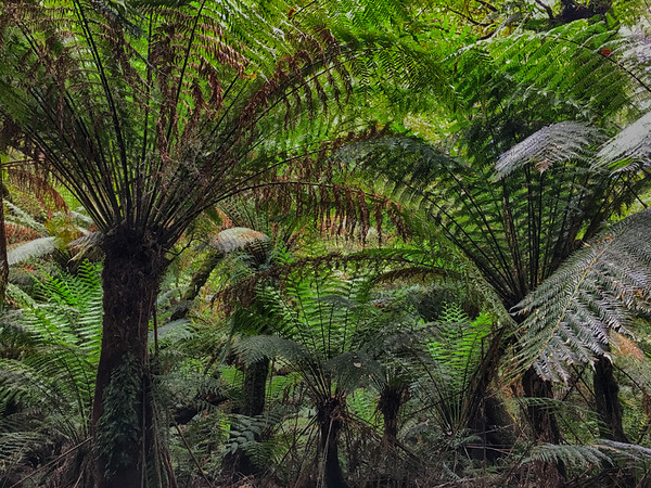 Fern Guardians