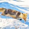 Fox Trails