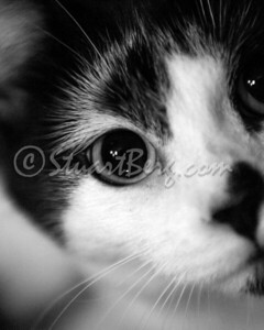 Oreo's Eye