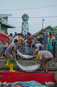 Acehnese fishermen offload their fish at a traditional port in Lampulo, Banda Aceh