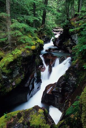 Avalalanche Creek