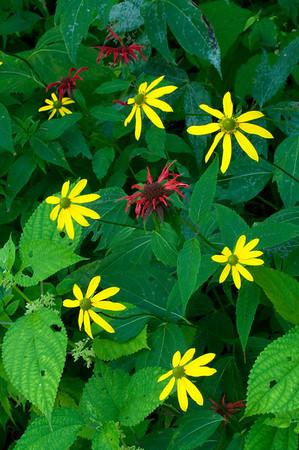 Sunflowers and Bee Balm