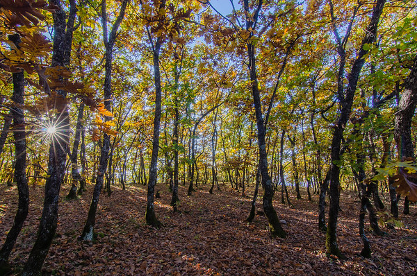 Karaiskaki forest, Mouzaki