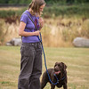 Gundog Club Level 1 & 2 Asessment Helen Phillips-9