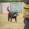 Gundog Club Level 1 & 2 Asessment Helen Phillips-15